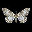 New records of geometrid moths (Lepidoptera: ...