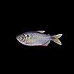 Ichthyofauna of the Reserva Biológica ...