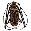 Acrocinus longimanus (Linnaeus, 1758) ...