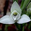 Survey of the vascular plants of Sierra ...