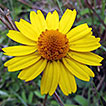 A checklist of Asteraceae from Pedra ...