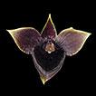 Telipogon jucusbambae (Orchidaceae), ...