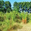 Exotic woody plants in Pelotas, Rio Grande ...