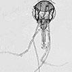 An updated list of sand flies (Diptera, ...