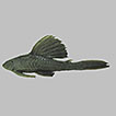 Fish fauna from the Langueyú basin, ...