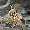 First documented record of the Stripe-backed ...