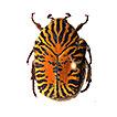 Checklist of the superfamily Scarabaeoidea ...