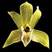 New record of Scaphyglottis livida (Lindl.) ...