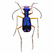 Annotated list of tiger beetles (Coleoptera, ...