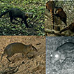A camera trapping survey of mammals in ...