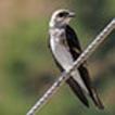 Birds from northeastern Bogotá ...