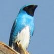 Preliminary survey of avifauna of the ...