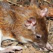 Small mammals from the Seasonally Dry ...