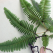 Three new records of fern species (Polypodiopsida) ...